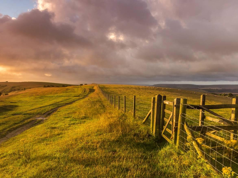 West-Sussex-England-landscape-grass-fence-farm-sheep_1600x1200.jpg